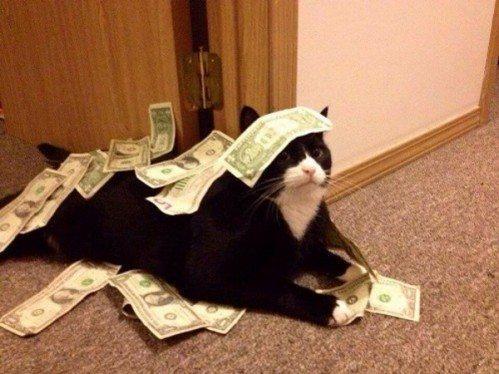 Gato preto e branco deitado no chão e em sua volta muitas notas de dinheiro.