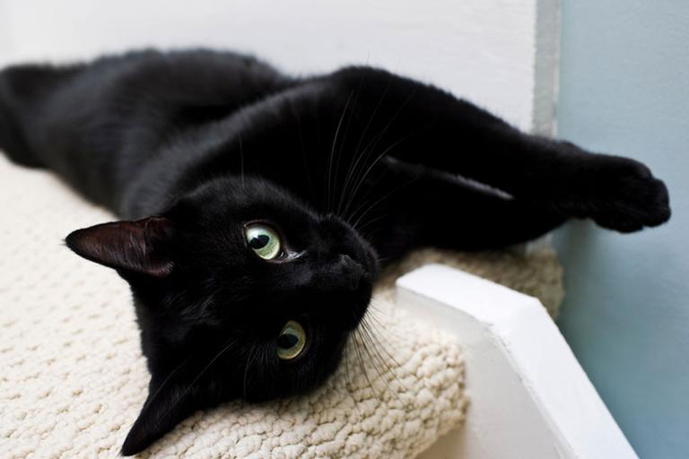 13 motivos para nunca mais associar gato preto ao azar
