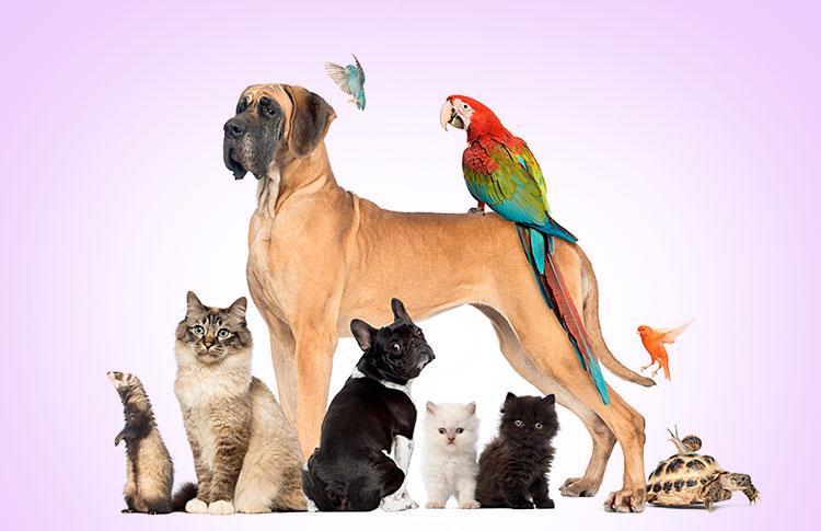 vários animais diferentes reunidos