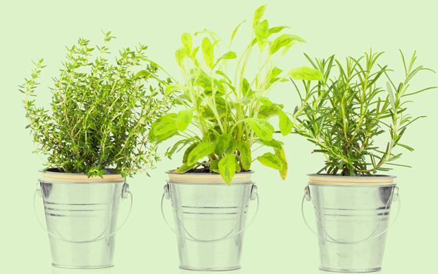 Três vasos com plantas que atraem proteção para sua vida.