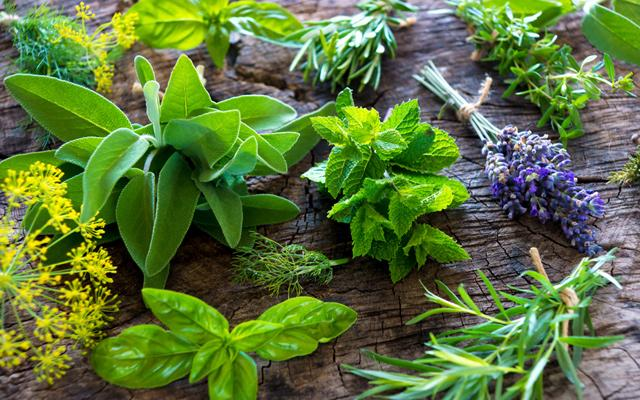 diversas ervas distintas representando o poder das 7 ervas.