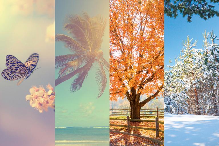A foto é uma montagem com quatro fotos, cada uma ilustrando características de cada estação do ano. A primeira, primavera, com uma flor e uma borboleta. A segunda, verão, com uma praia, sol e um coqueiro. A terceira, outono, com uma árvore alaranjada. A quarta, inverno, com uma floresta coberta por neve.