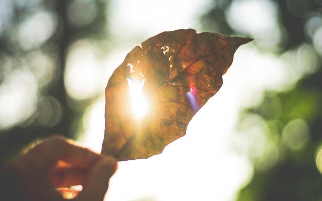 Mão segurando folha seca contra o sol para ter força no dia a dia