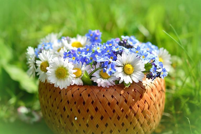 flor preferida