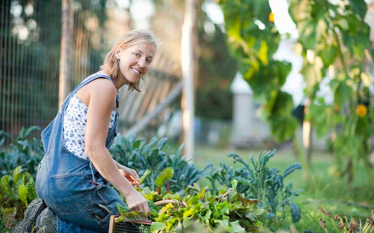 jardim das 7 ervas