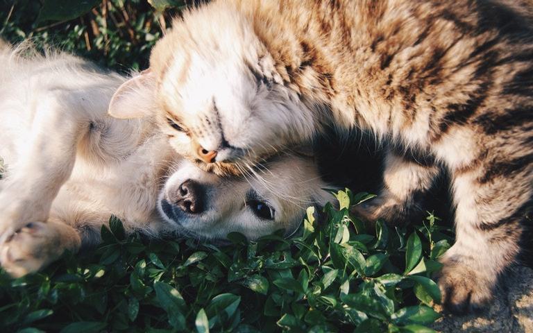 Você pode ajudar seu pet a enfrentar o estresse na quarentena