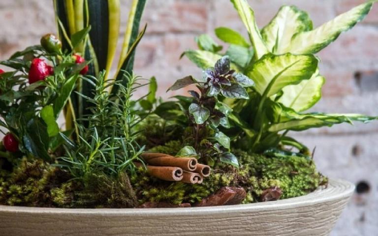 O vaso das sete ervas é um ótimo amuleto de proteção para sua casa