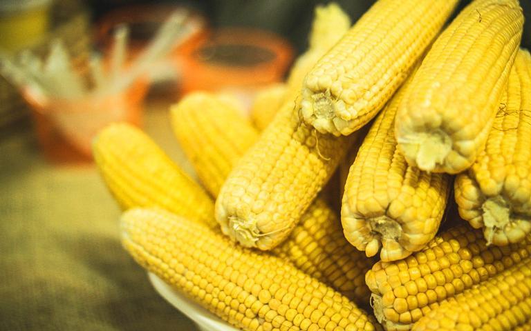 O milho não pode faltar na mesa de festa junina