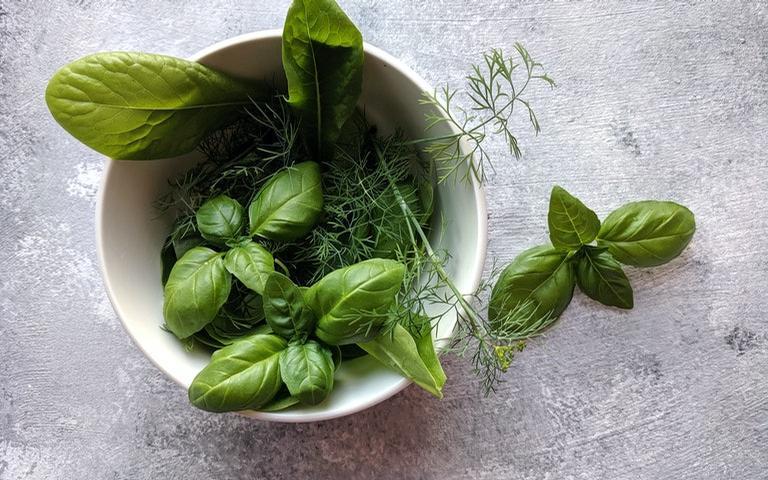 Algumas espécies de ervas contém propriedades calmantes