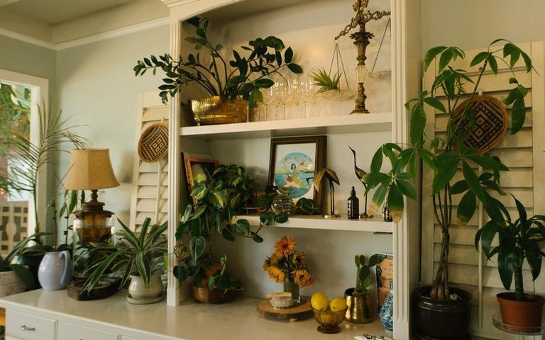 Chame as energias da natureza para sua casa