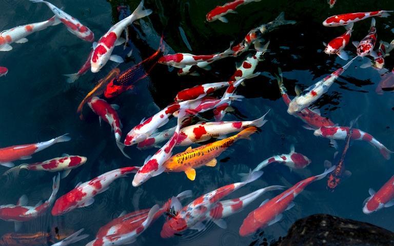 Sonhar com peixe pode ser um bom sinal