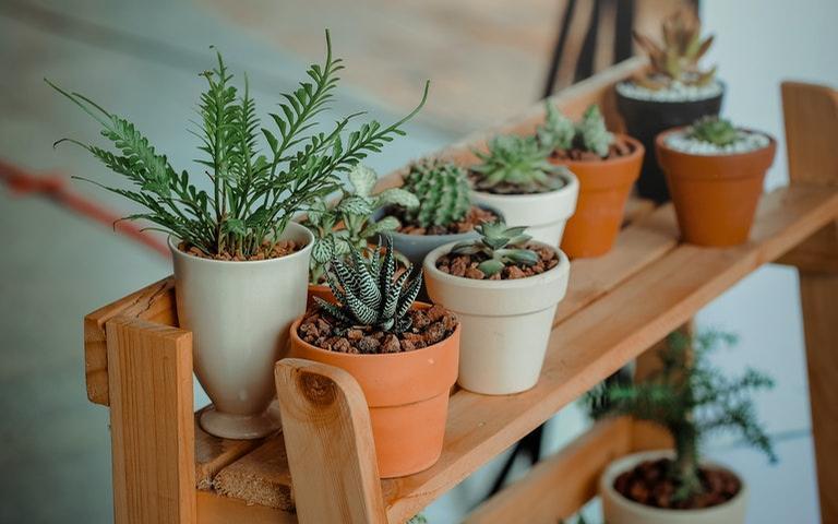 Aumente o astral do ambiente por meio das plantas - Crédito: Min An/Pexels