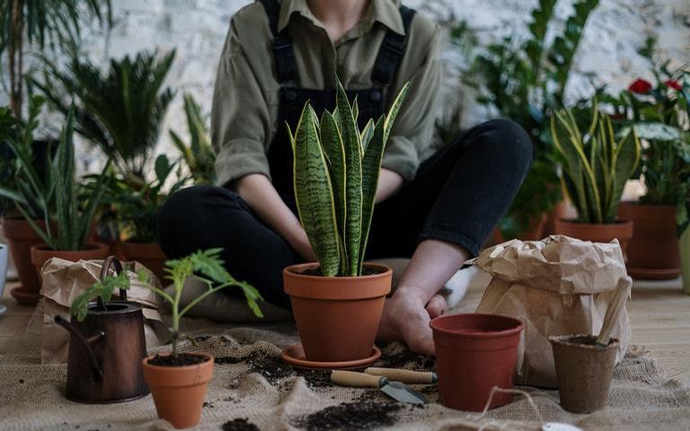Conheça as plantas que atraem dinheiro