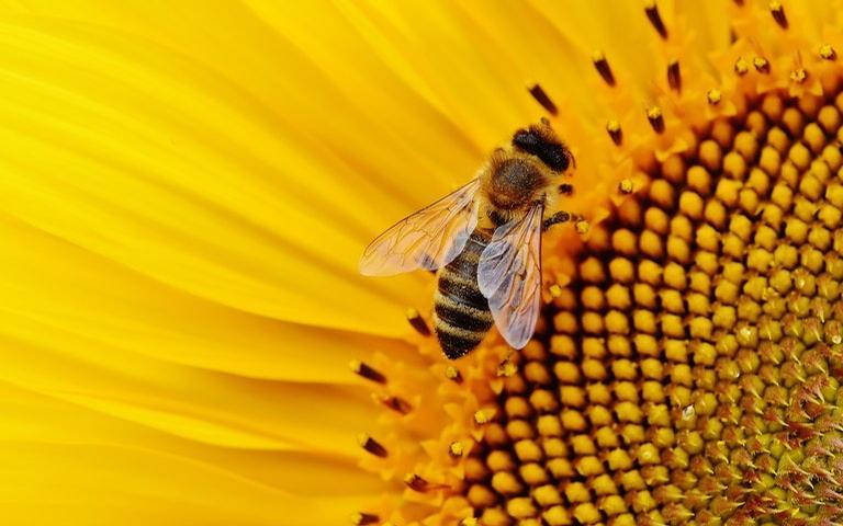 Descubra o que significa sonhar com abelha
