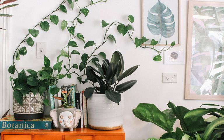 Conheça as plantas que afastam as energias negativas