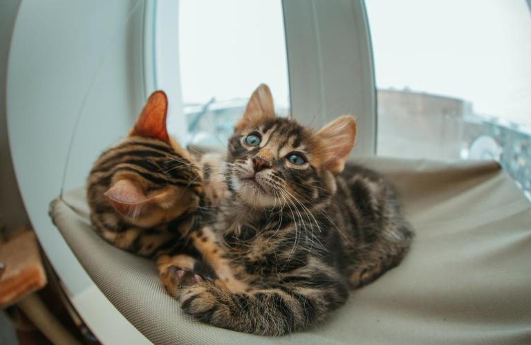 Saiba agora o significado das cores dos gatos - Shutterstock