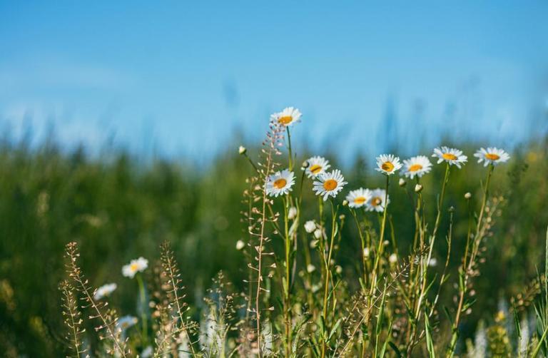 Conheça o mito de Deméter e saiba como atrair prosperidade com ritual para primavera
