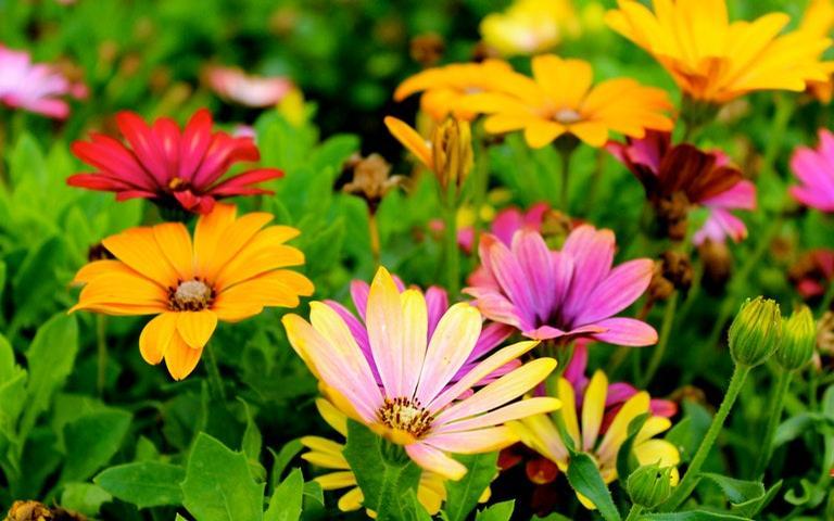 Confira como fazer as simpatias da estação das flores