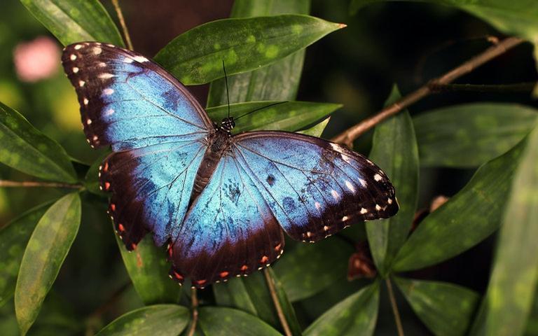 Conheça todo o poder espiritual das borboletas