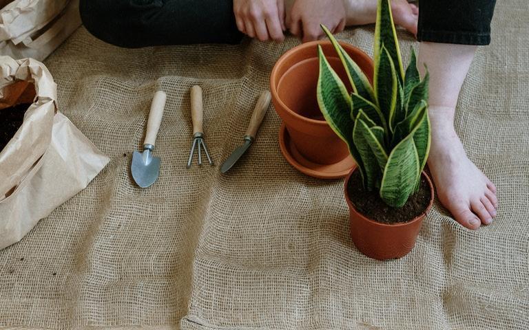 Veja como desenvolver a paciência com o cultivo de plantas