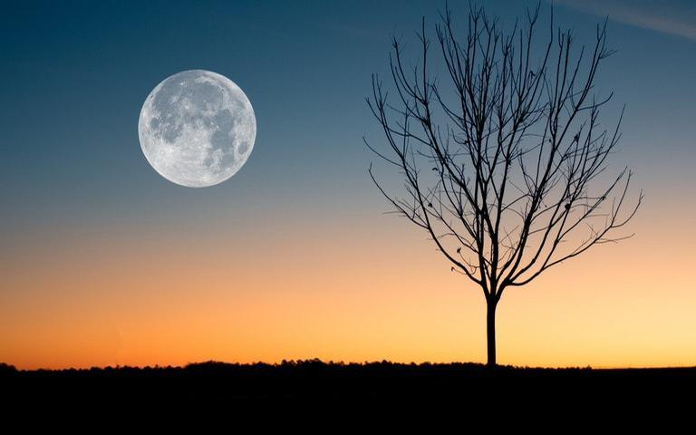 Descubra a relação entre o crescimento das plantas com as fases da Lua