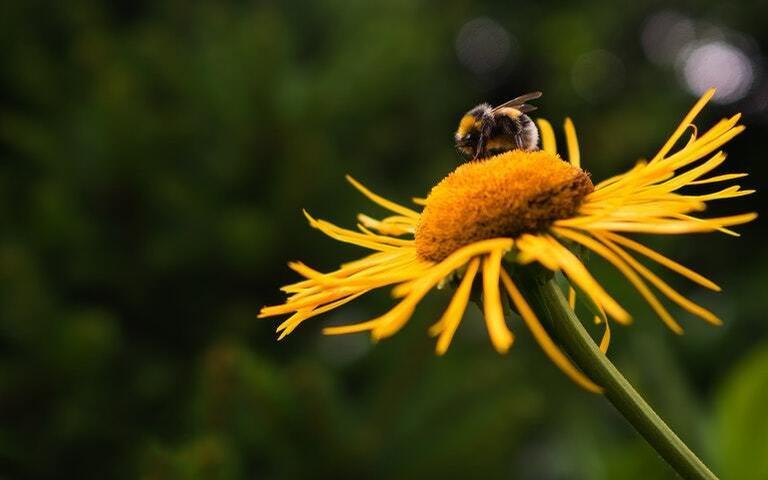 Simbologia das abelhas