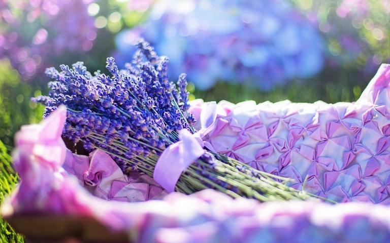 Mude as energias com a Aromaterapia