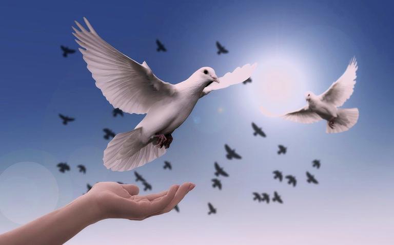 Faça uma meditação com as palavras de paz