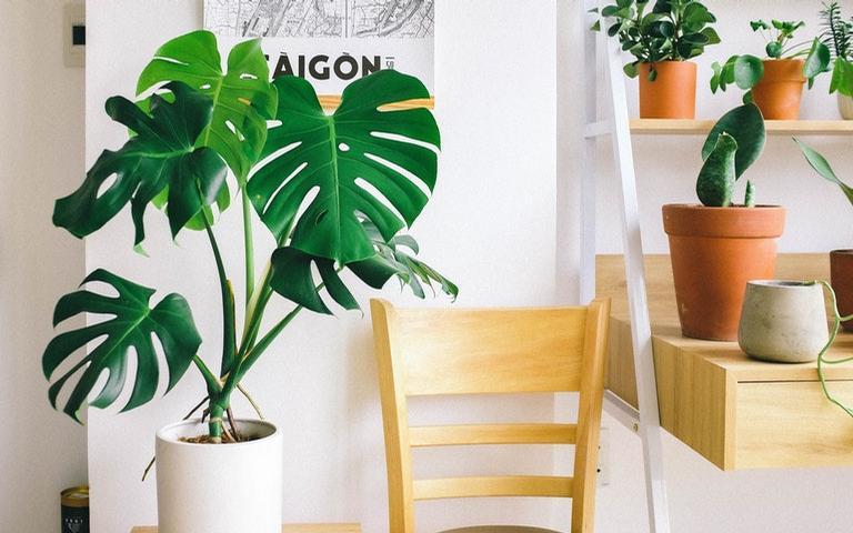 Conheça o astral de diferentes plantas