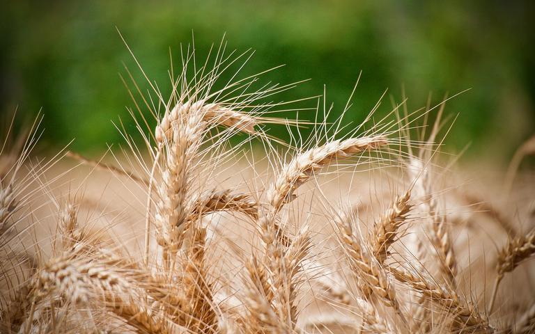 Conheça as simpatias com farinha de trigo