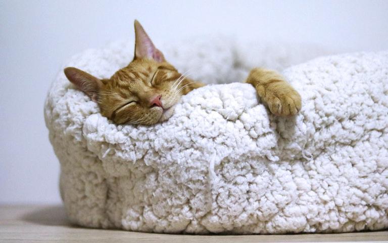 Conheça as simpatias para dormir bem
