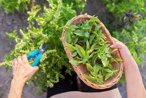 Descubra quais propriedades energéticas existem nas plantas