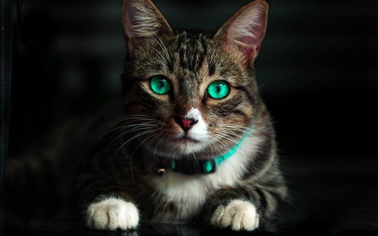 Confira como é o gato de cada signo