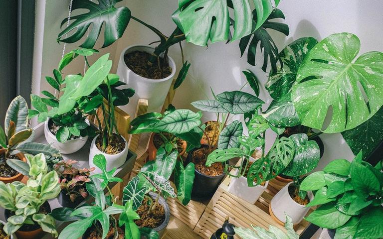 Proporcione mais qualidade de vida no seu lar com essas plantas