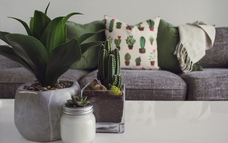 Veja 5 maneiras de trabalhar com a natureza no seu lar