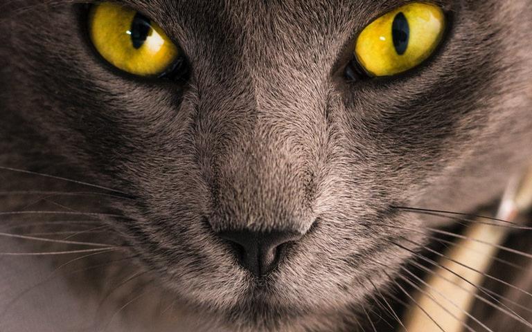 Saiba mais sobre os dons místicos dos gatos