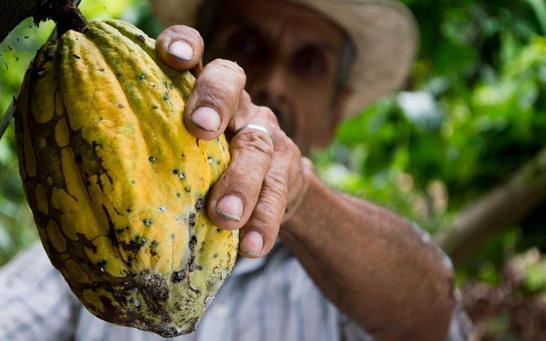 Conheça mais sobre o fruto dos deuses e seu ritual.