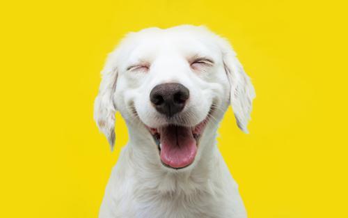 Você conhece o signo do seu pet? Sabe o signo do Sol? Conhece o signo lunar de seu cãozinho? Saiba porque é importante conhecê-los