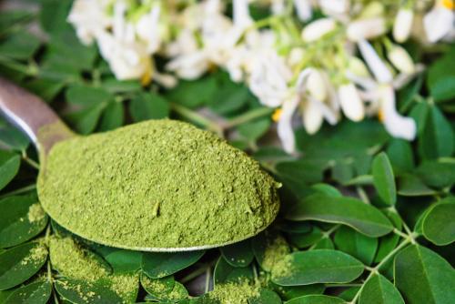 Moringa: Conheça 3 receitas com a planta