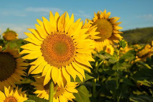 Veja como essa linda flor pode levantar o seu astral e melhorar a sua vida