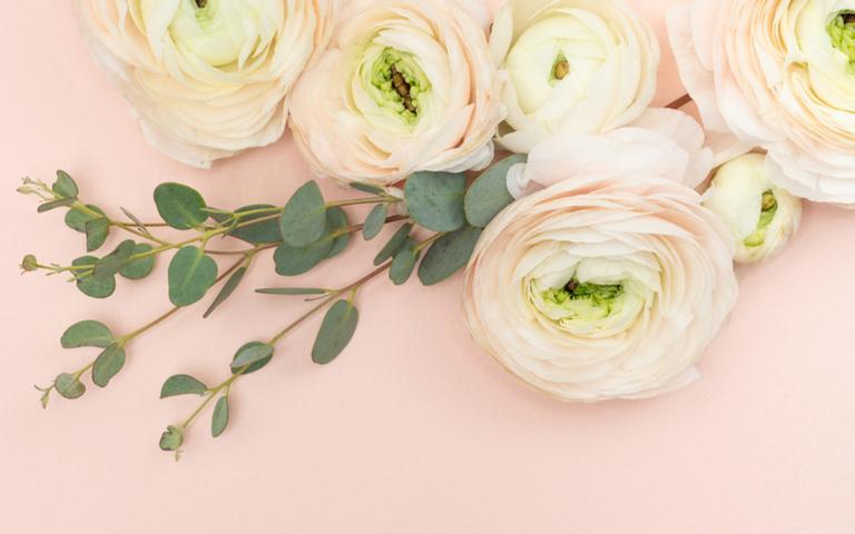 Dicas sobre o uso da rosa branca e seus benefícios no banho, no chá e em rituais