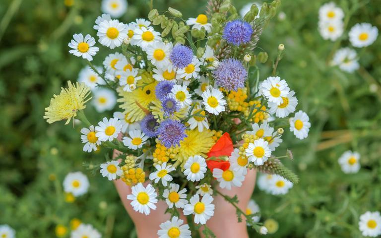 As flores são elementos que fortalecem os signos