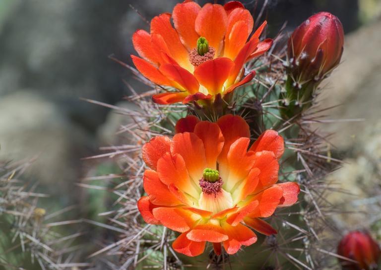 Veja qual flor tem mais a ver com você e saiba quais são seus pontos forte