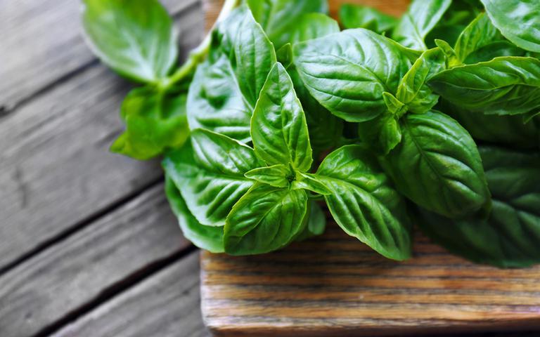 Conheça mais utilidades desta erva que vão muito além do uso na culinária