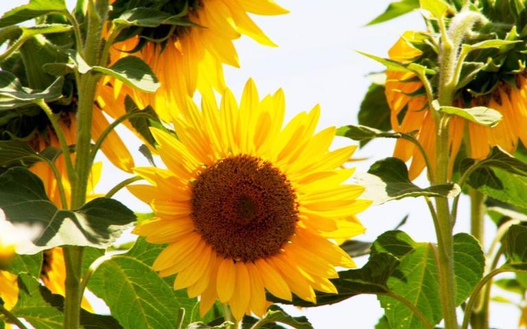Descubra quais flores trazem mais sorte para a sua vida